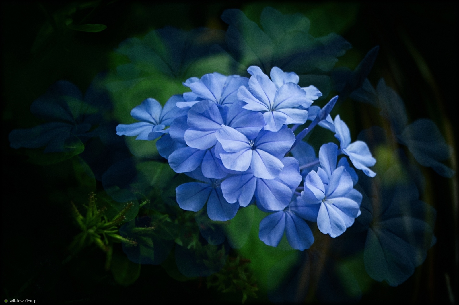 7633f844070dca blue - Fotoblog wil-low.flog.pl