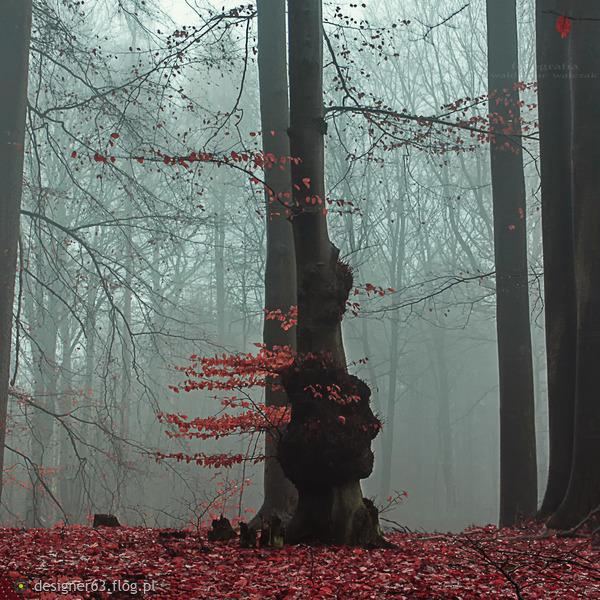http://s26.flog.pl/media/foto_middle/12854275_pazdziernikowy-las.jpg