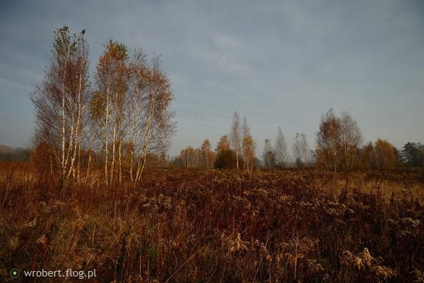 http://s26.flog.pl/media/foto_middle/12855695_to-ja-betula-dziko-uroslam-na-lace.jpg